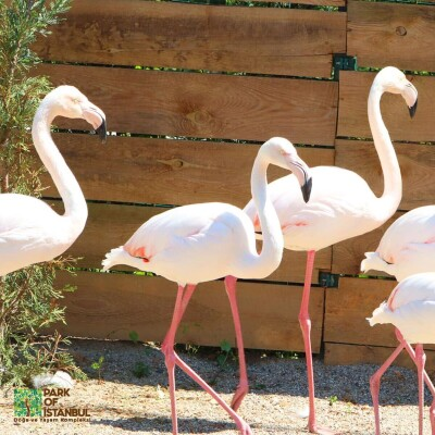 Park Of İstanbul Hayvanat Bahçesi Giriş Bileti