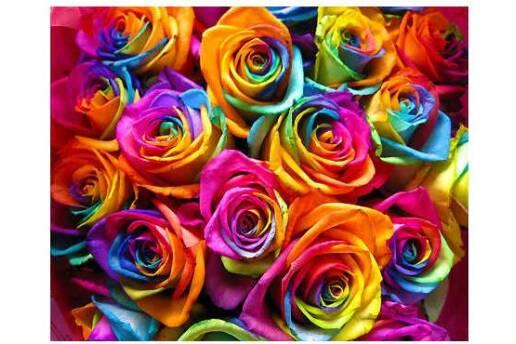 5 Farklı Renk Sihirbaz Gül Tohumu ( 50 Tohum)
