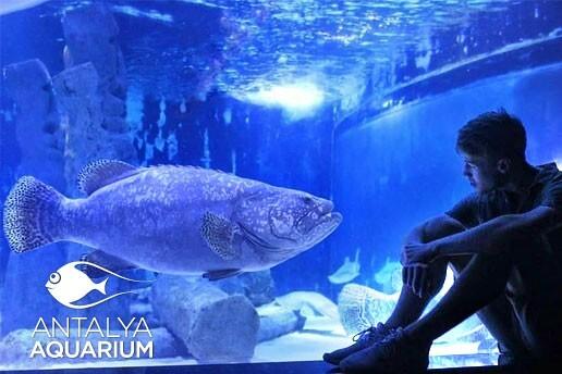 Dünyanın En Büyük Tünel Akvaryumu Olan Antalya Akvaryum Biletleri