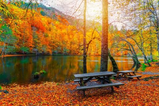 Her Cumartesi ve Pazar Serpme Kahvaltı & Sucuk Ekmek Dahil Ormanya, Hobbit Evleri ve Abant Gölü Turu