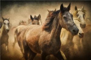 Koşan Atlar Forex Tablo