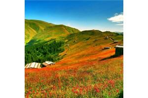 Her Pazar Hareketli Yarım Pansiyon Konaklamalı Kuzey Yıldızı Doğu Karadeniz ve Batum Turu