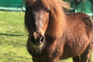 Çekmeköy Güneş Binicilik'ten Tadı Damağınızda Kalacak Kişi Başı Serpme Kahvaltı Menüsü ve At Binme