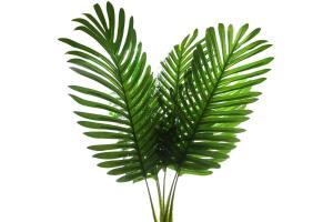 Yapay Çiçek Palmiye Yaprağı 3 Adet Yapay Yaprak