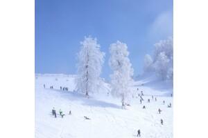 Hafta İçi Her Gün Kalkışlı Kahvaltı Dahil Günübirlik Maşukiye Kartepe Kayak Turu