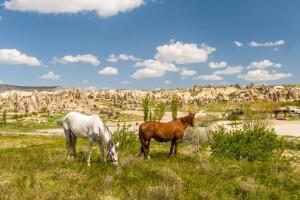 Her Cuma Hareketli Tursit Otel'de 1 Gece 2 Gün Konaklamalı Güzel Atlar Ülkesi Kapadokya Turu