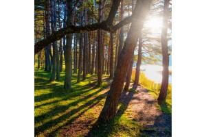Her Cumartesi - Pazar Kalkışlı Günübirlik Abant Ormanya Maşukiye Turu