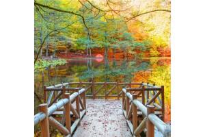 29-30-31 Ekim Özel Günübirlik Yedigöller Turu